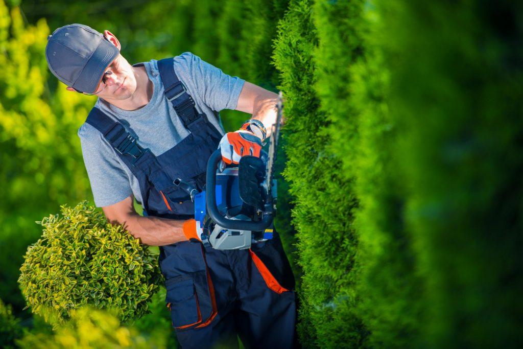 tree expert working on bush trimming