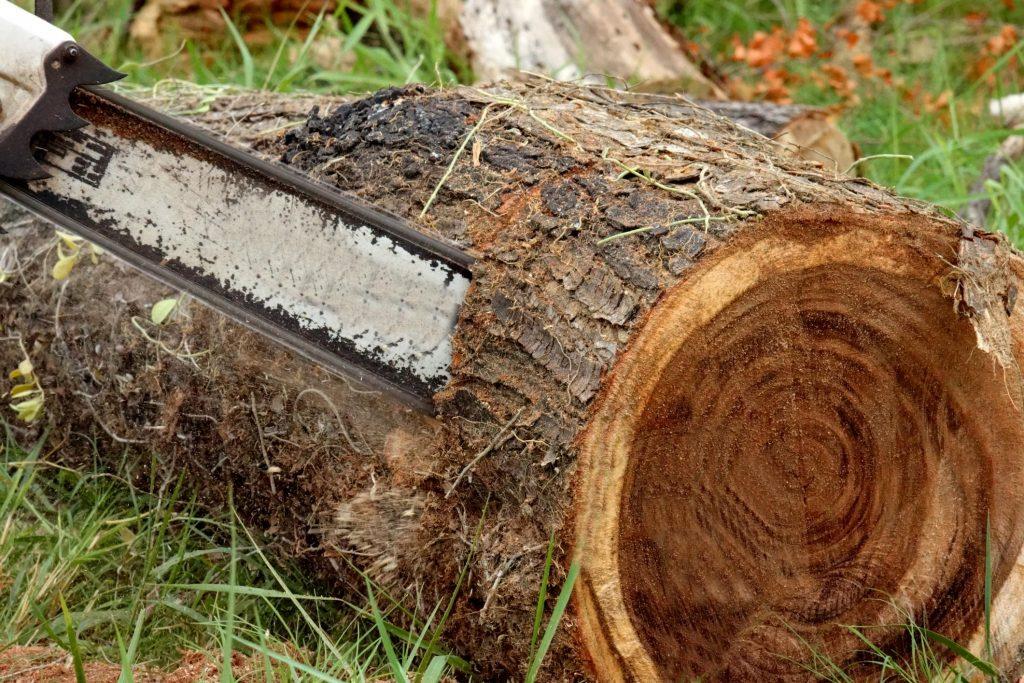 tree cutting in progress