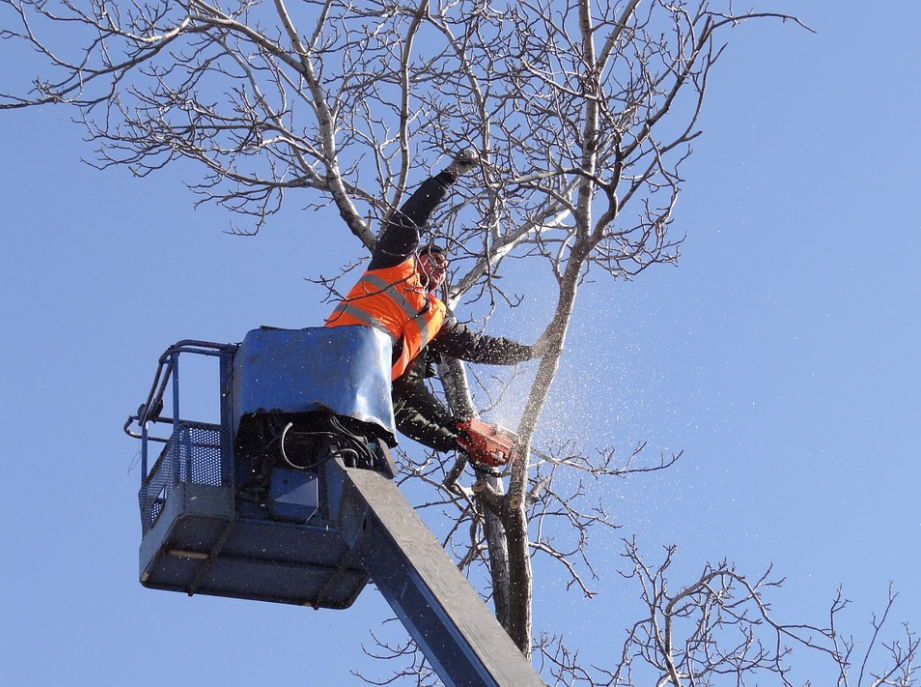 this picture shows independence tree service crew on duty